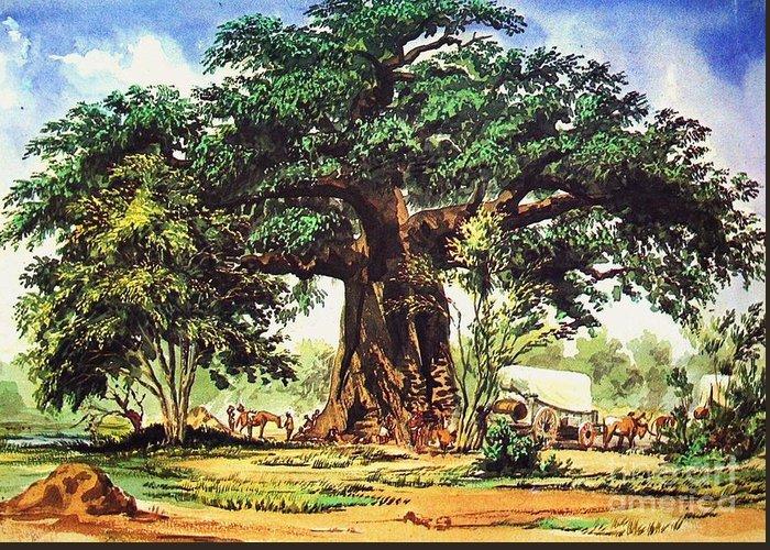 Baobab Greeting Cards