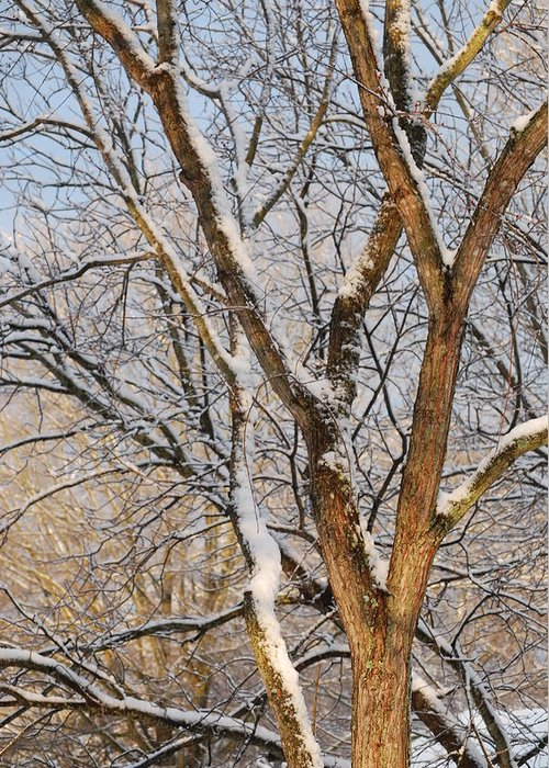 Trees. Branches Greeting Card featuring the photograph Bare Branches by Trudi Southerland