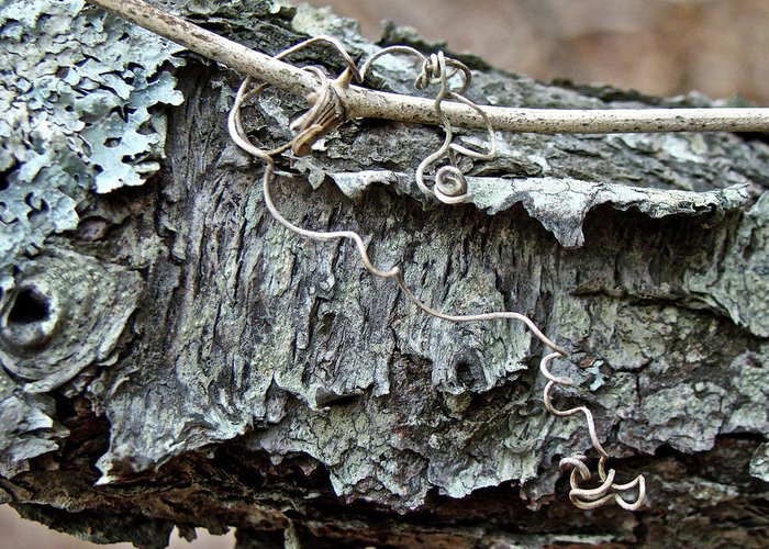 Tree Greeting Card featuring the photograph Bark - Lichen - Cat Brier Tendrils by Mother Nature