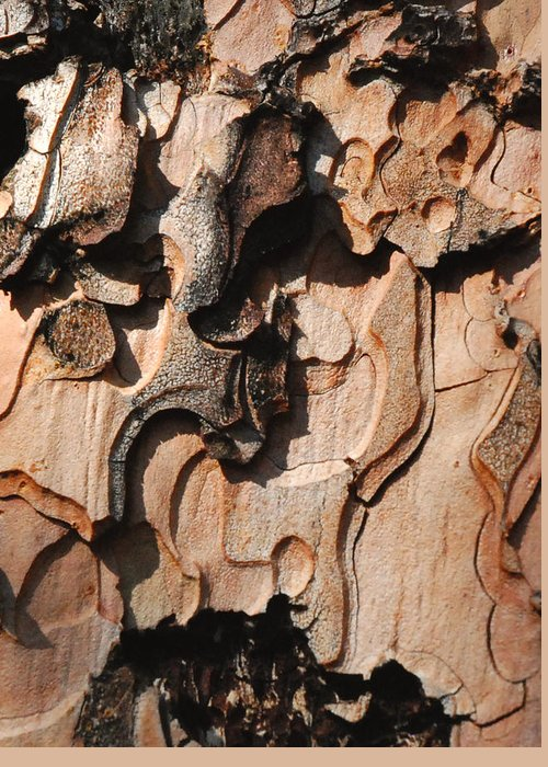 Bark Greeting Card featuring the photograph Bark Landscape by Maria Curcic
