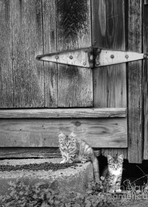 Cats Greeting Card featuring the photograph Barn Cats by Pete Hellmann