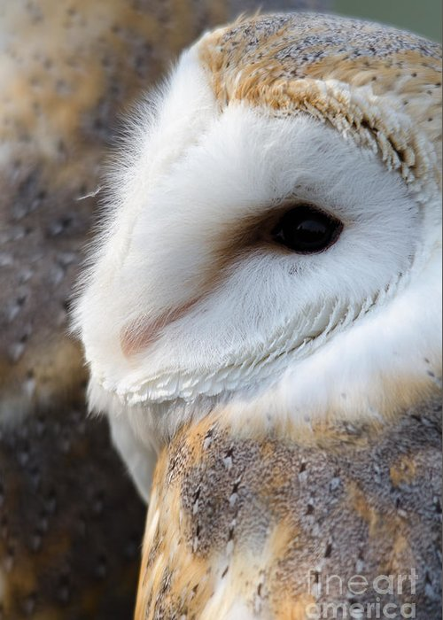 Owl Greeting Card featuring the photograph Barn Owl Portrait by Steev Stamford
