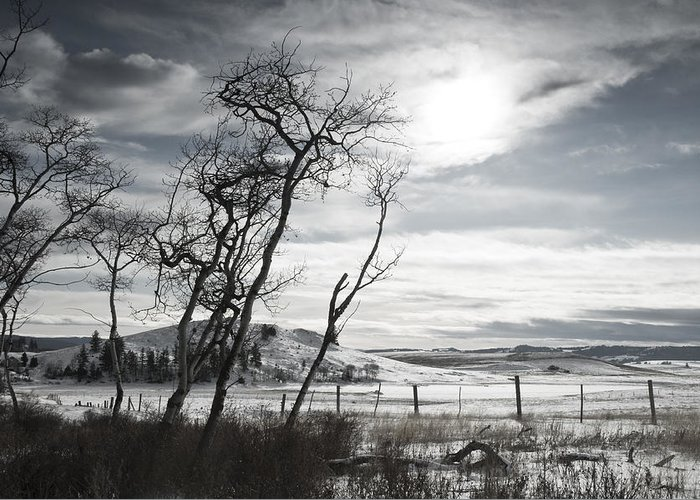 Winter Greeting Card featuring the photograph Barren Land by Peter Olsen
