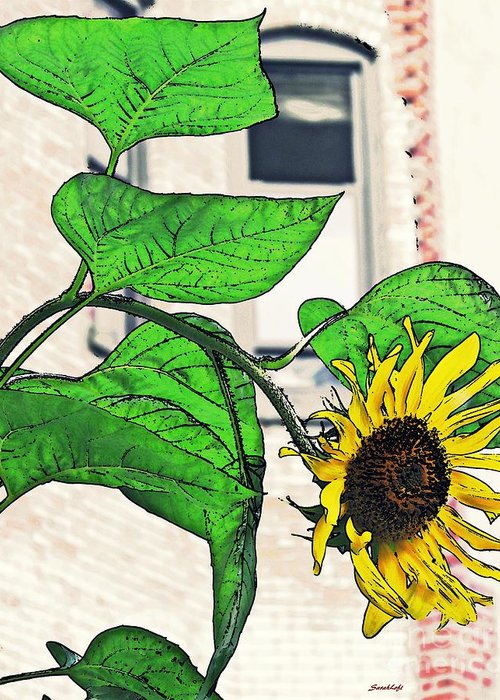 Sunflower Greeting Card featuring the photograph Barrio Sunflower by Sarah Loft