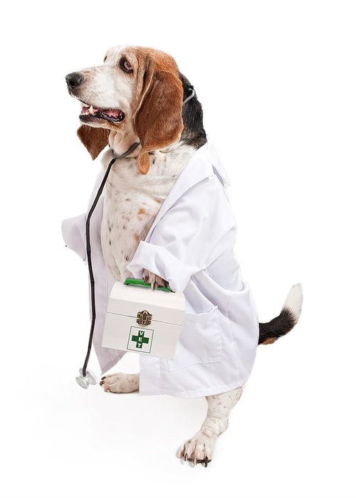 Dog Greeting Card featuring the photograph Basset Hound Dog Dressed As A Veterinarian by Susan Schmitz