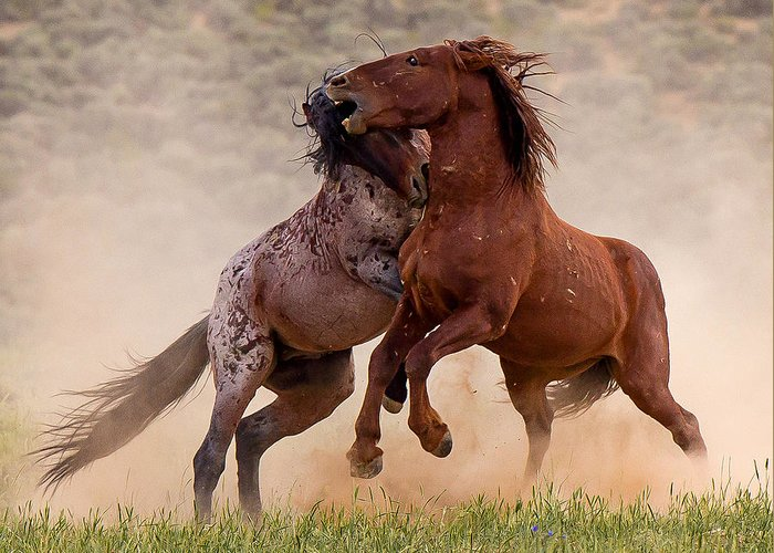 Horse Greeting Card featuring the photograph Battleground by Terry Hawthorne