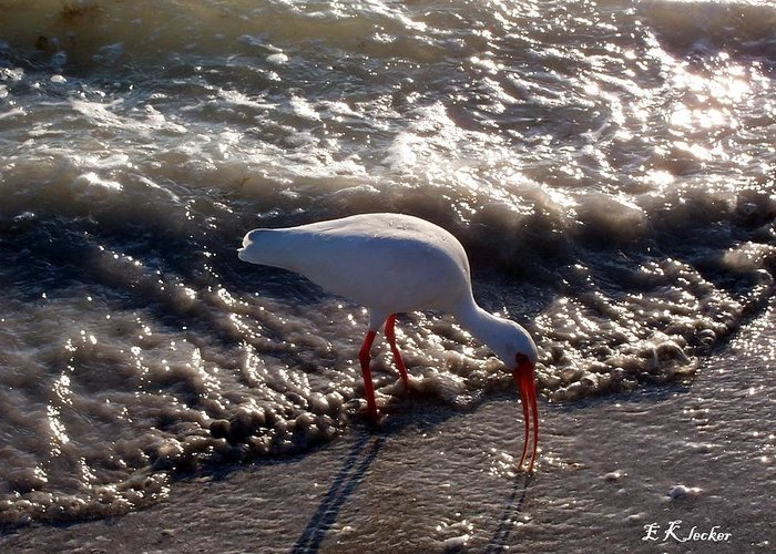 Beach Greeting Card featuring the photograph Beach Bird by Elizabeth Klecker