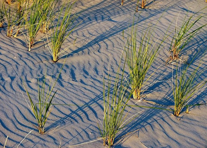 Sunset Greeting Card featuring the photograph Beach Grass by Sheli Kesteloot