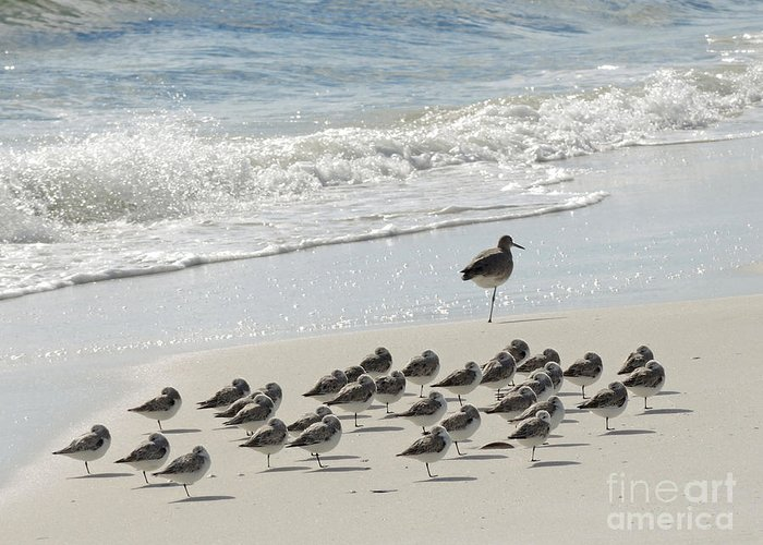 Nature Greeting Card featuring the photograph Beach Mantra by Lucyna A M Green