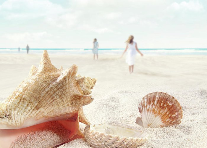 Aquatic Greeting Card featuring the photograph Beach Scene With People Walking And Seashells by Sandra Cunningham
