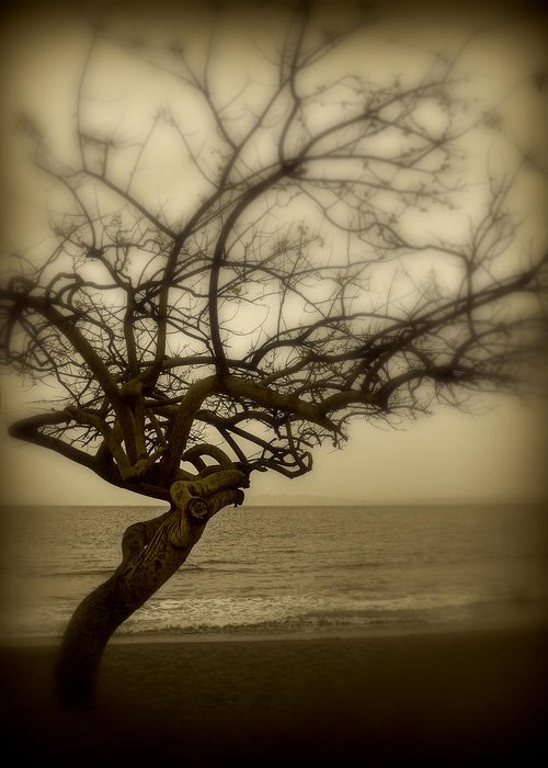 Tree Greeting Card featuring the photograph Beach Tree by Perry Webster