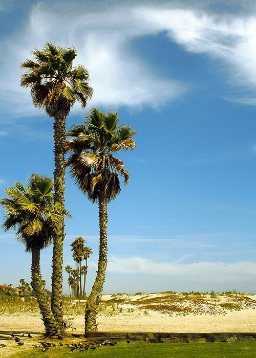 Palm Tree Greeting Card featuring the photograph Beach View With Palms And Birds by Ben and Raisa Gertsberg