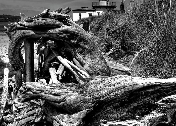 Tree Stump Greeting Card featuring the photograph Beached Tree Stump by David Patterson