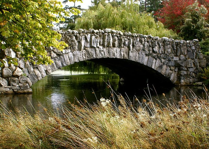 Bridge Greeting Card featuring the photograph Beacon Hill Park by Sonja Anderson