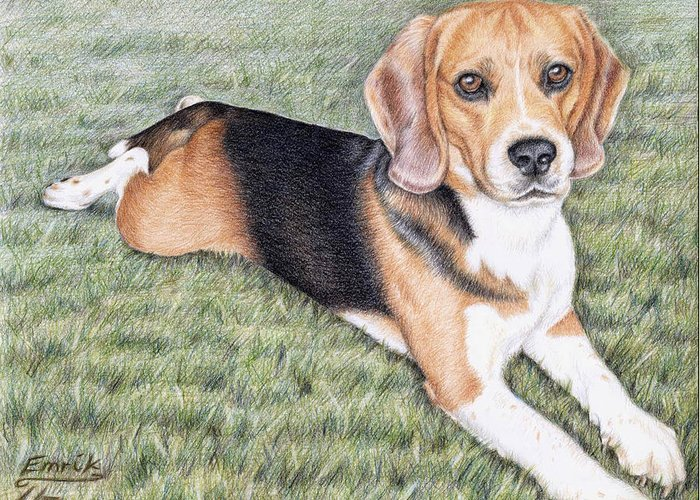 Dog Greeting Card featuring the drawing Beagle by Nicole Zeug