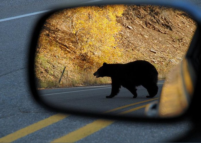 Bear Greeting Card featuring the photograph Bear Chance by Al Swasey