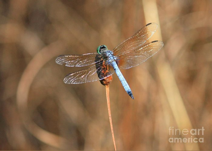Dragonfly Greeting Card featuring the photograph Beautiful Broken Wing by Carol Groenen