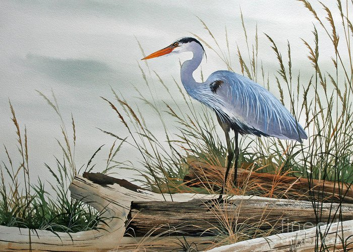 Beautiful Heron Shore Print Greeting Card featuring the painting Beautiful Heron Shore by James Williamson
