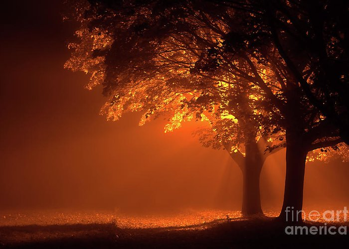 Night Greeting Card featuring the photograph Beautiful Trees At Night With Orange Light by Simon Bratt Photography LRPS