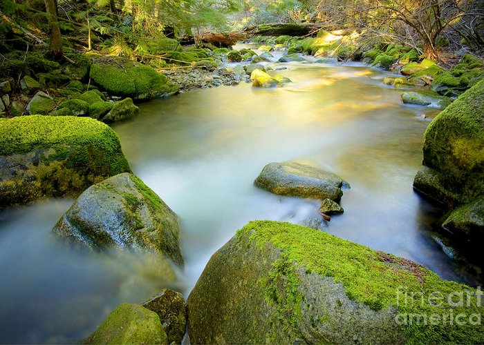 Creek Greeting Card featuring the photograph Beauty Creek by Idaho Scenic Images Linda Lantzy