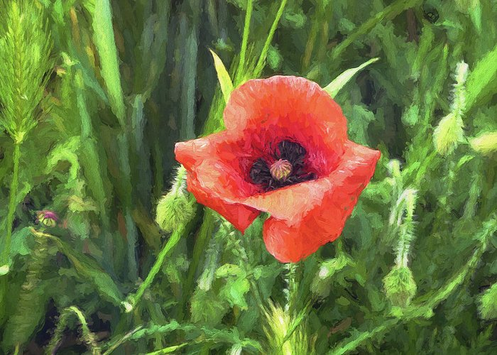 One Greeting Card featuring the digital art Beauty Of A Poppy by Louloua Asgaraly