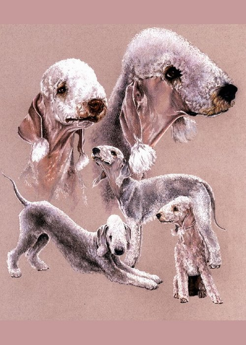 Dog Greeting Card featuring the drawing Bedlington Terrier by Barbara Keith