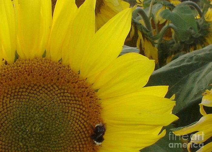 Bee's Greeting Card featuring the photograph Bee On Sunflower 1 by Chandelle Hazen