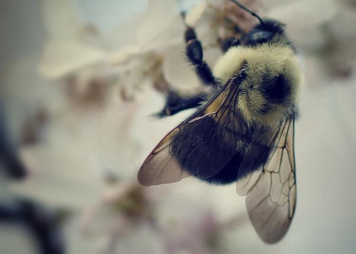 Bumble Bee Greeting Cards