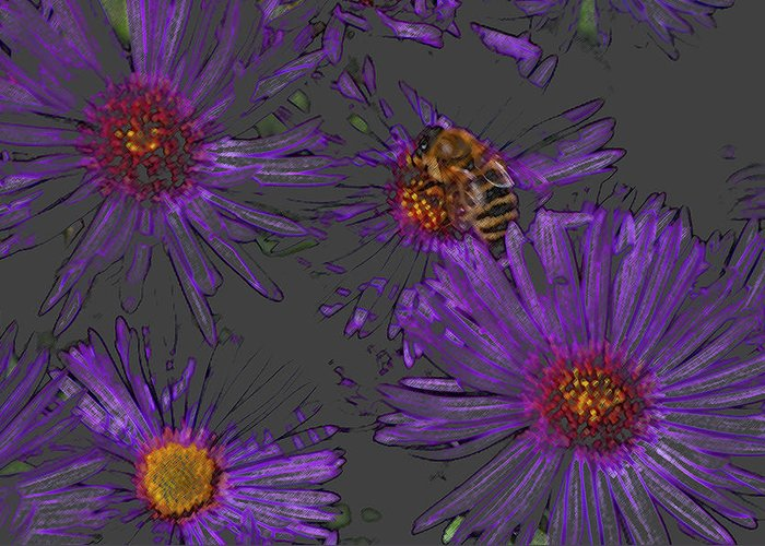 Asters Greeting Card featuring the photograph Bee With Asters On Gray by ShaddowCat Arts - Sherry