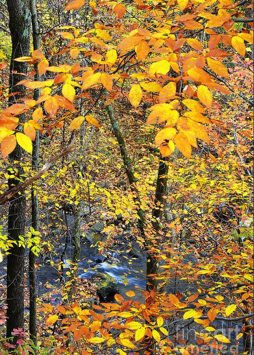 West Virginia Greeting Card featuring the photograph Beech Leaves Birch River by Thomas R Fletcher