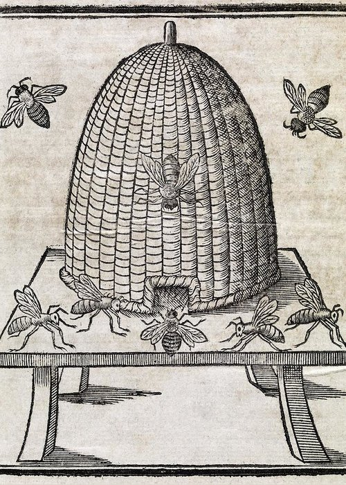 Animal Greeting Card featuring the photograph Bees And Beehive, 17th Century Artwork by Middle Temple Library