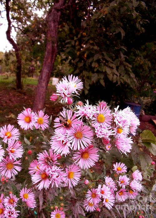 Asters Greeting Card featuring the photograph Beeze In The Breeze by The Stone Age