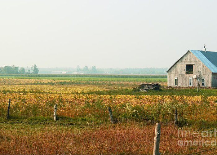 Countryside Greeting Card featuring the photograph Before The Sweat by Aimelle