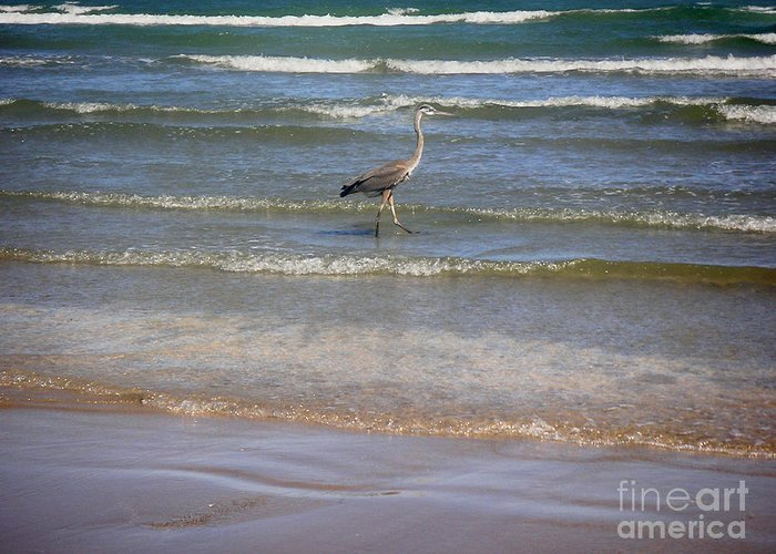 Nature Greeting Card featuring the photograph Being One With The Gulf - Alert by Lucyna A M Green