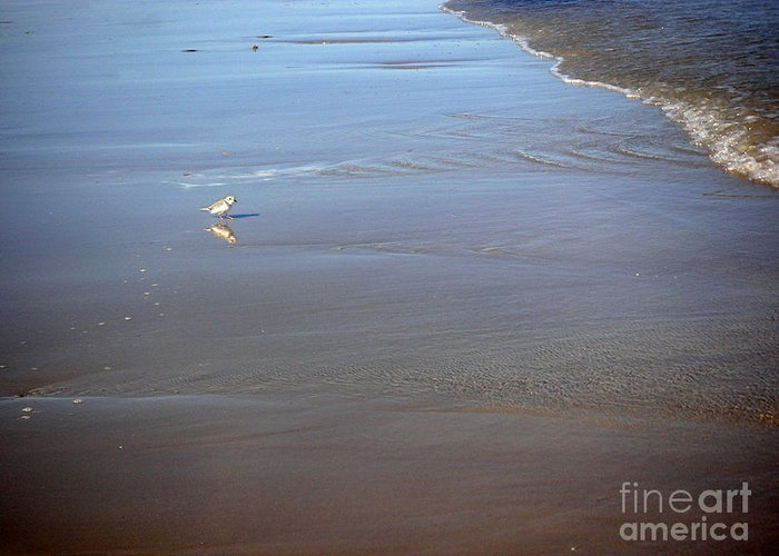 Nature Greeting Card featuring the photograph Being One With The Gulf - Cautious by Lucyna A M Green
