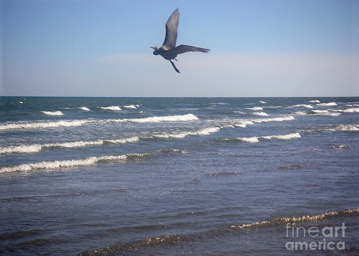 Nature Greeting Card featuring the photograph Being One With The Gulf - On Wings by Lucyna A M Green