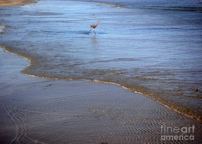 Nature Greeting Card featuring the photograph Being One With The Gulf - Playing by Lucyna A M Green