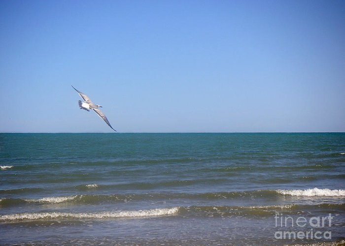 Nature Greeting Card featuring the photograph Being One With The Gulf - Soaring by Lucyna A M Green