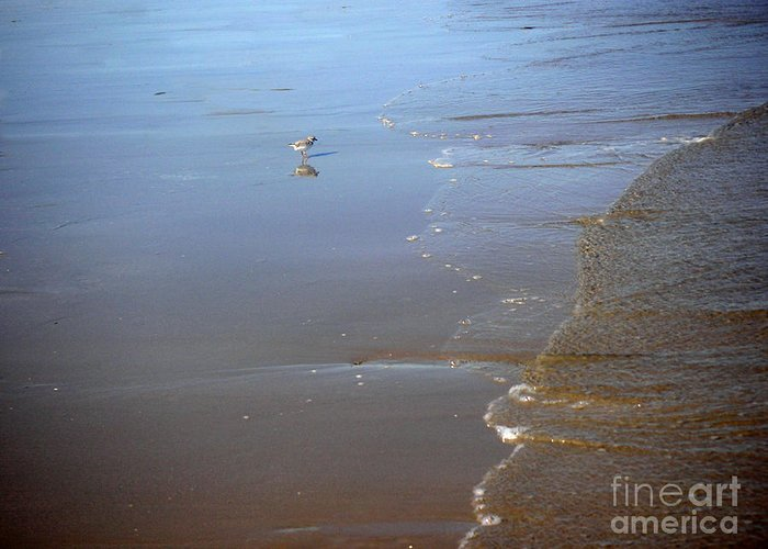 Nature Greeting Card featuring the photograph Being One With The Gulf - Still by Lucyna A M Green