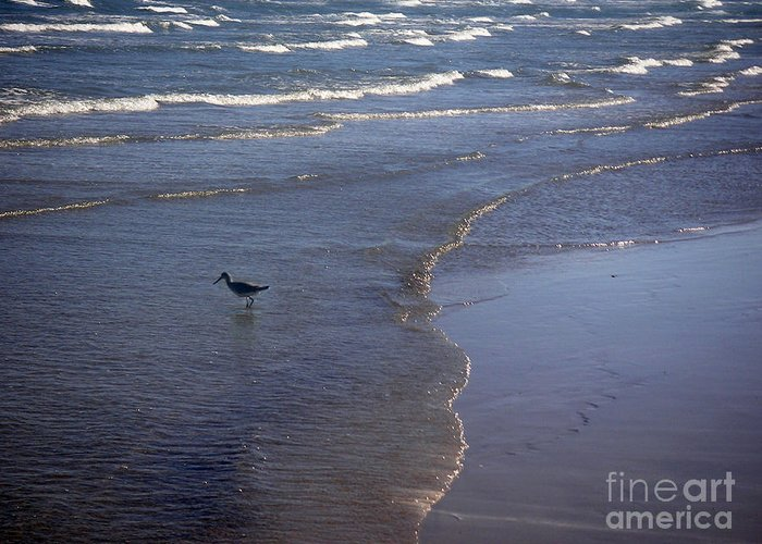 Nature Greeting Card featuring the photograph Being One With The Gulf - Vigilant by Lucyna A M Green