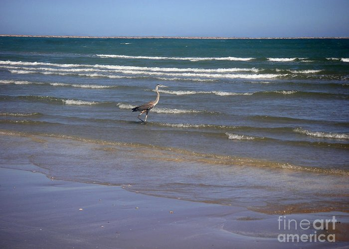 Nature Greeting Card featuring the photograph Being One With The Gulf - Wading by Lucyna A M Green