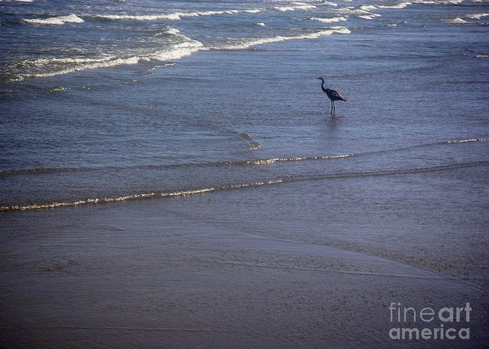 Nature Greeting Card featuring the photograph Being One With The Gulf - Watching by Lucyna A M Green