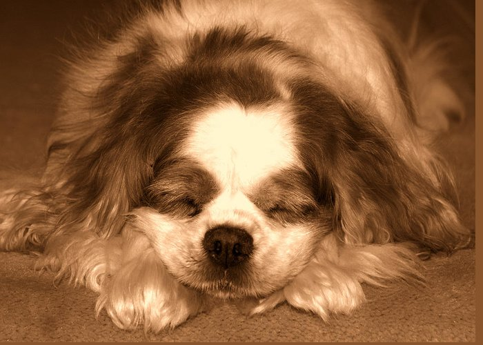 Dog Greeting Card featuring the photograph Belle Asleep by Kathi Shotwell