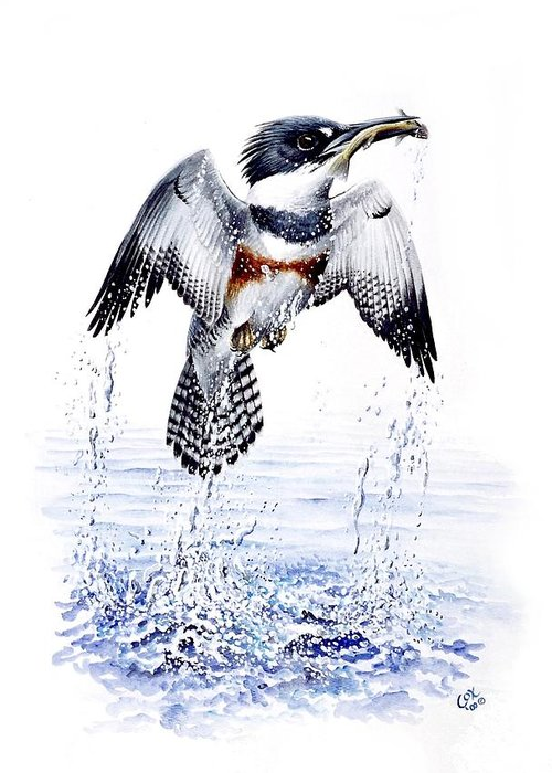Chris Cox Greeting Card featuring the painting Belted Kingfisher by Christopher Cox