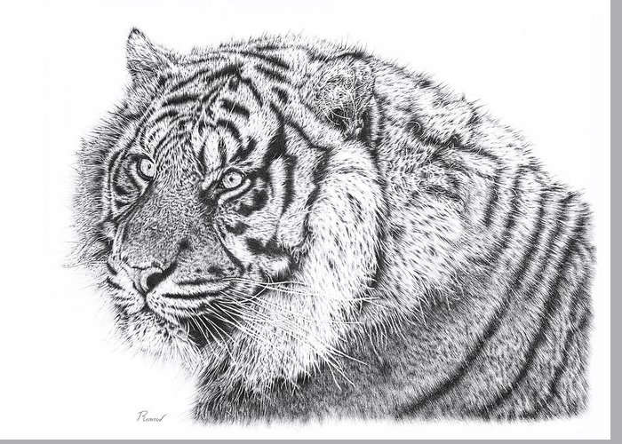 Pencil Drawing Greeting Card featuring the drawing Bengal Tiger by Remrov