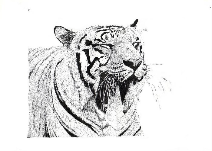 Tiger Greeting Card featuring the drawing Bengala Tiger by Angel Ortiz