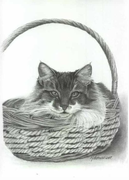 Cat In A Basket Greeting Card featuring the drawing Benny by Marlene Piccolin