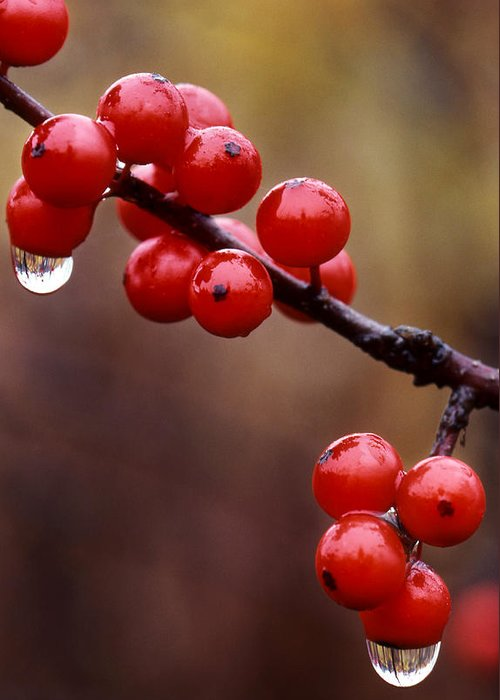 Berries Greeting Card featuring the photograph Berries With Water Droplets by Tony Ramos