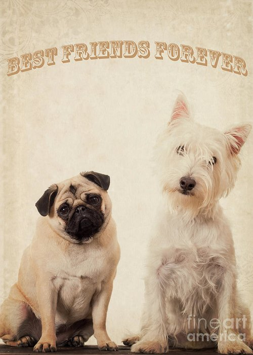 Bff Greeting Card featuring the photograph Best Friends Forever by Edward Fielding