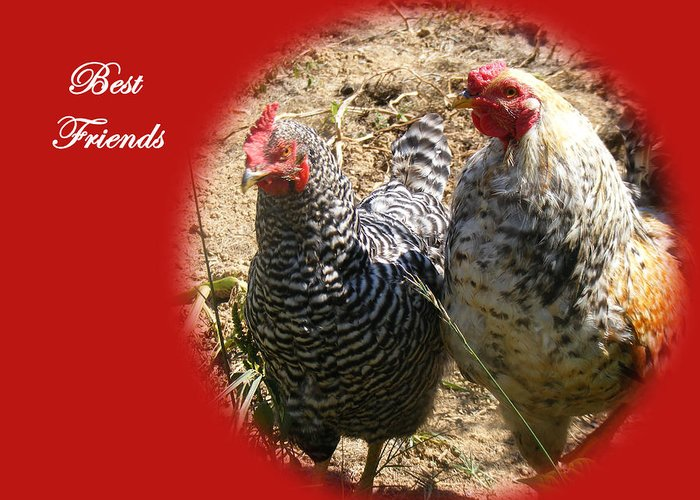 Chickens Greeting Card featuring the photograph Best Friends by James and Vickie Rankin